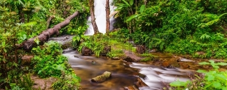 23314923-peaceful-mountain-stream-flows-through-lush-forest--doi-inthanon-national-park-thailand